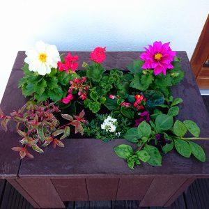 Planter Barna 10